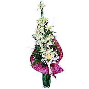 Buket orhideja HR