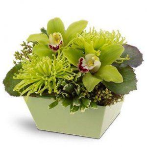 Orhideje - BiH
