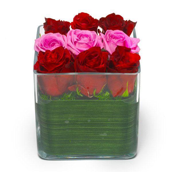 Ruže Red Berlin