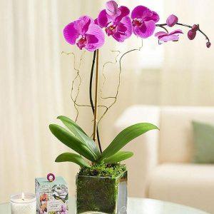 Saksijsko cveće 002