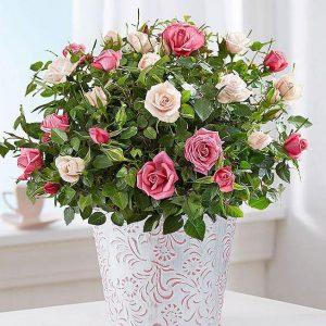 Saksijsko cveće 003