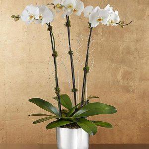 Saksijsko cveće 010