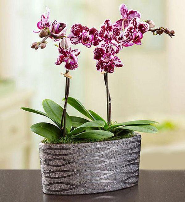 Saksijsko cveće 011