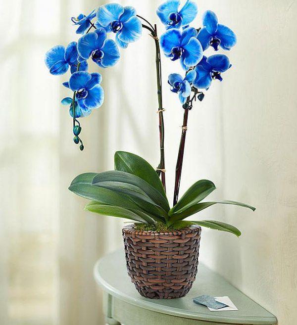 Saksijsko cveće 012