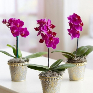 Saksijsko cveće 014