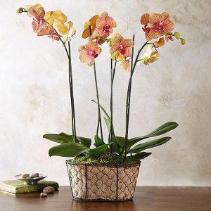 Saksijsko cveće 015