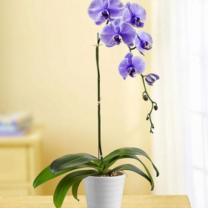 Saksijsko cveće 016