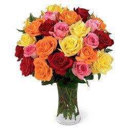 Šarene ruže HR