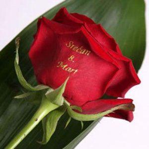 Govoreće Cveće Red